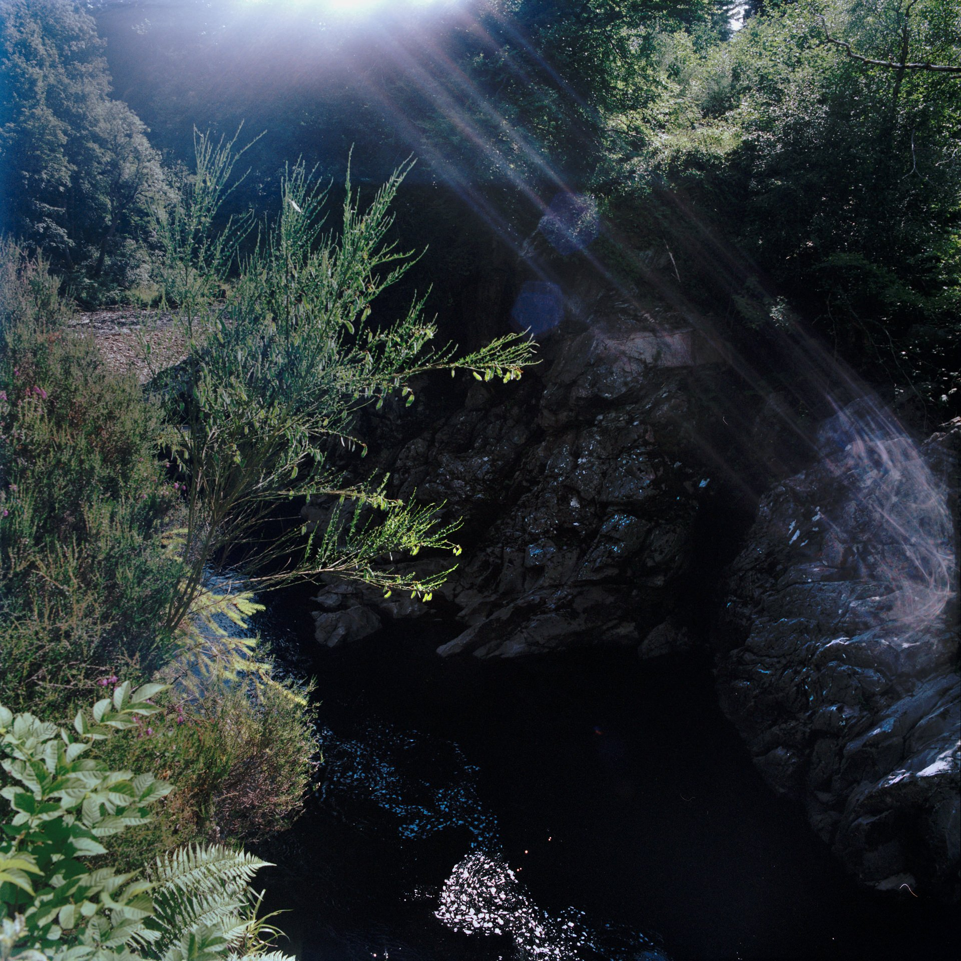 Brightly lit bushes with sun-beam on rocks with river running through them