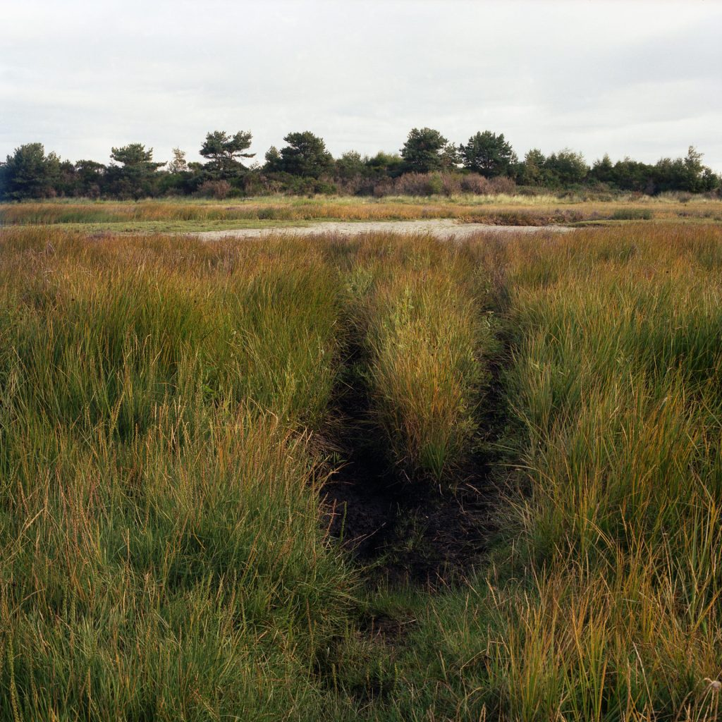 Kinsteps marshes at Nairn Culbin forest with gorse bushes and a stream of water in the backgound and a surface marking in the long reed grass